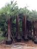 ต๋องปาล์ม garden