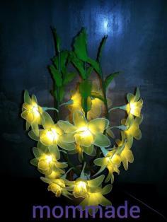 โคมไฟดอกฟีเซีย