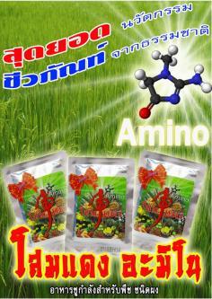 โสมแดงAmino อาหารชูกำลังพืช ชนิดผง