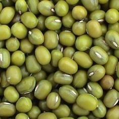 เมล็ดถั่วเขียว