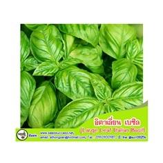อิตาเลี่ยน เบซิล (Large Leaf Italian Basil) / 200 เมล็ด