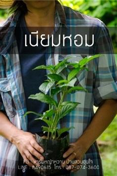 ต้นเนียมหอม หรืออ้มหอม