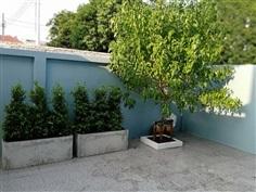 บริการรับปลูกต้นไม้ทุกชนิด