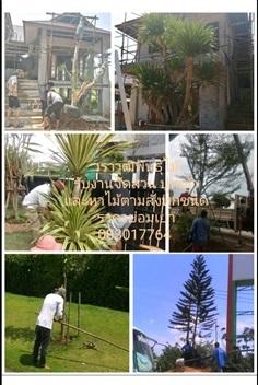 รับจัดสวน และ หาต้นไม้ตามออเดอร์ ราคาย่อมเยา