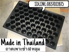 ถาดเพาะชำ 60 หลุม ( ผลิตในประเทศไทย )